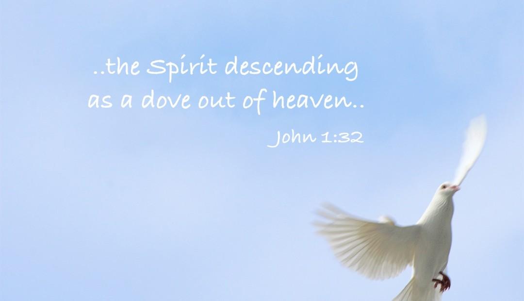 【读圣经学英语】那灵,仿佛鸽子从天降下