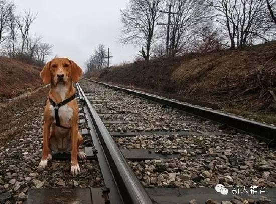 犬追火车猫追尾