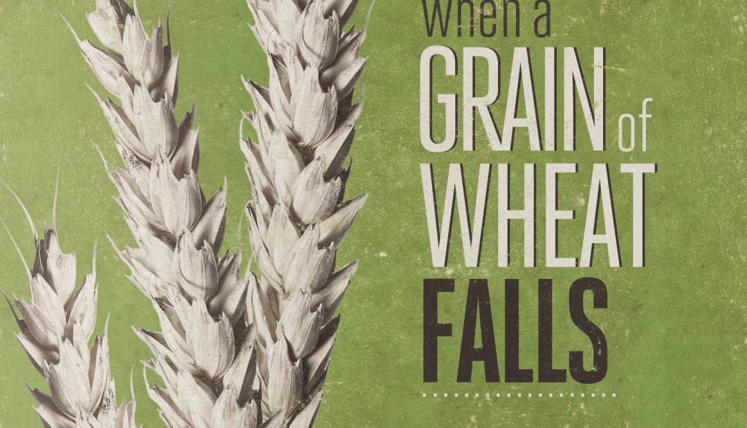 【读圣经学英语】一粒麦子