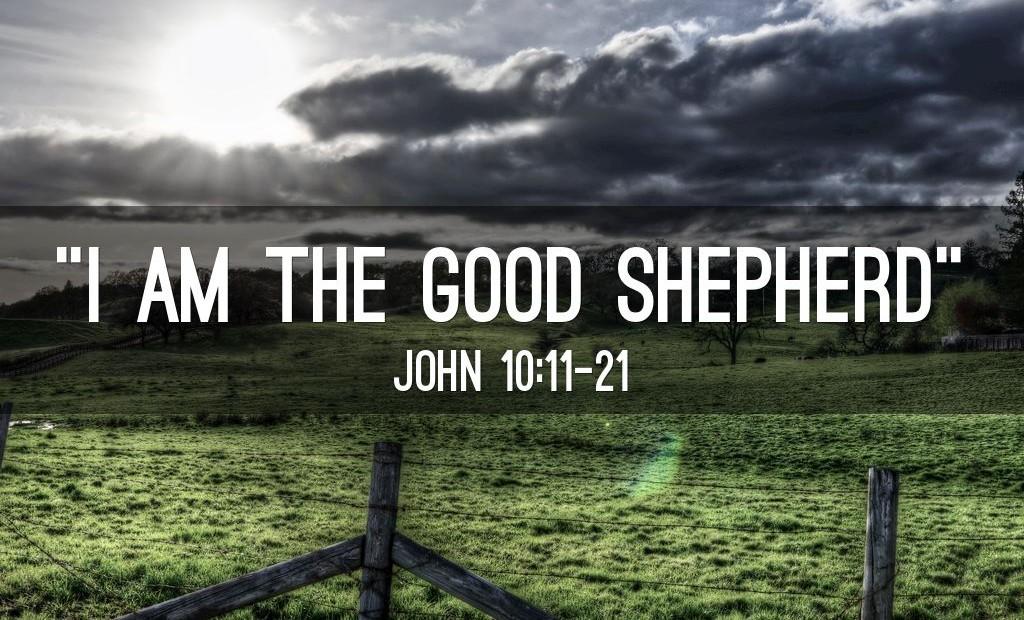 【读圣经学英语】我是好牧人