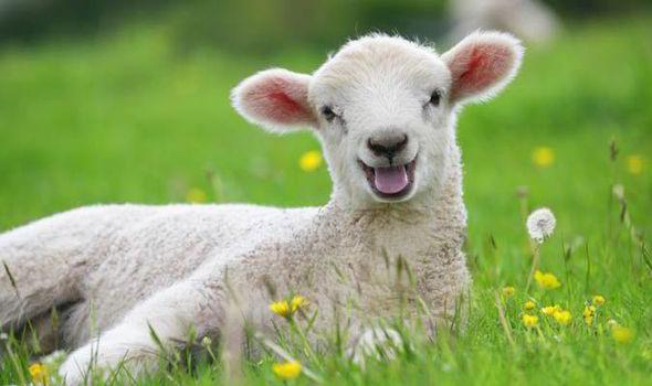 【读圣经学英语】羊绝不跟着生人