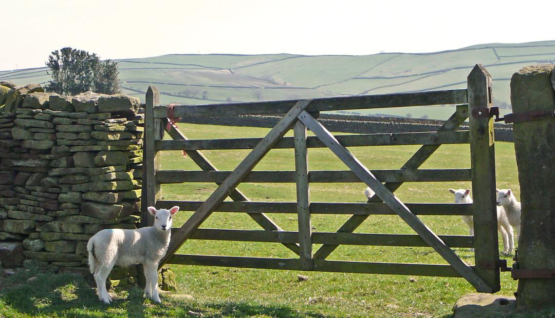 【读圣经学英语】我就是羊的门