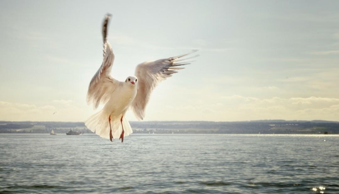天空的飞鸟