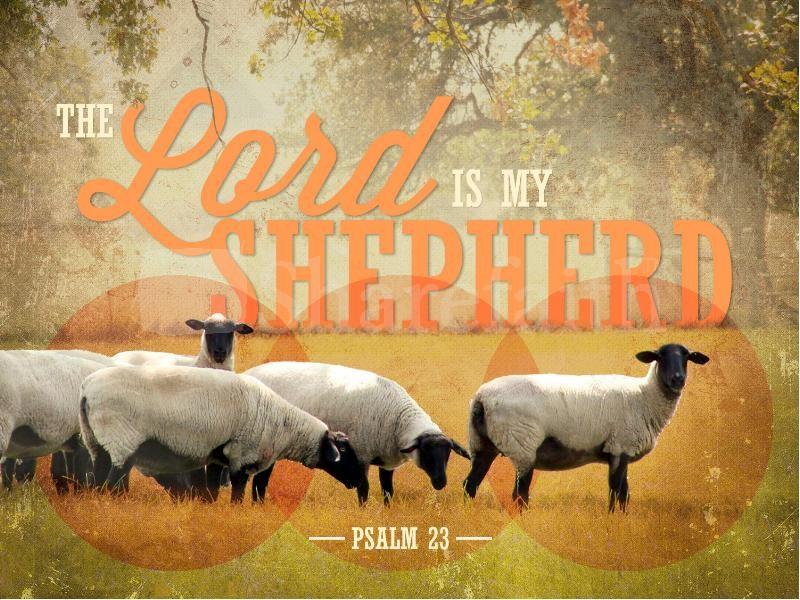【读圣经学英语】归一个牧人