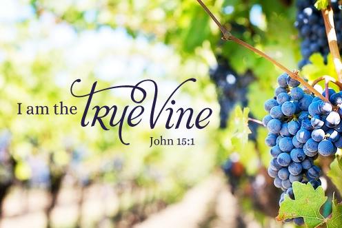 【读圣经学英语】我是真葡萄树