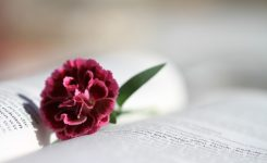 【读圣经学英语】出于父