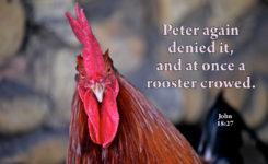【读圣经学英语】鸡就叫了