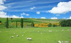 出羊圈,进草场