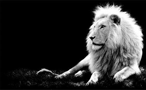 【鱼和饼】狮子