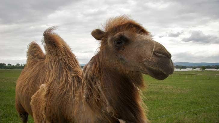 【读圣经学英语】身穿骆驼毛