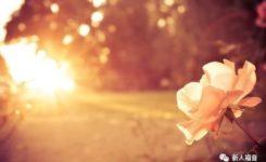 【新约圣经鸟瞰】第十五讲:路加福音——福音信息