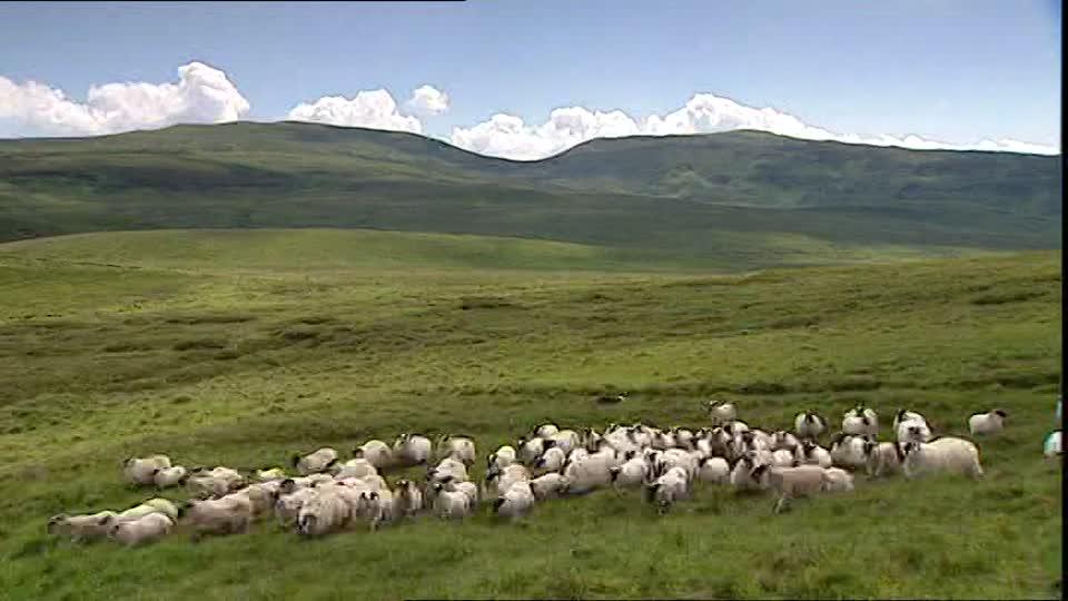 【读圣经学英语】如同羊没有牧人