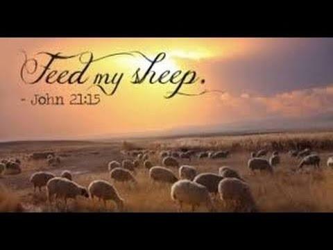 【读圣经学英语】喂养我的羊